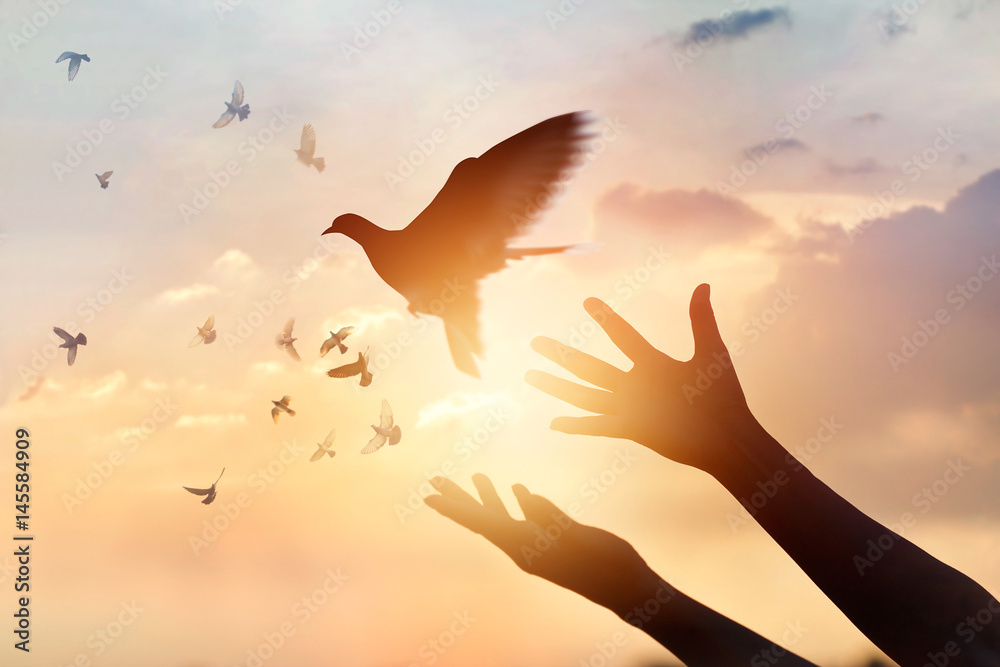 Fototapety, obrazy: Woman praying and free the birds flying on sunset background, hope concept