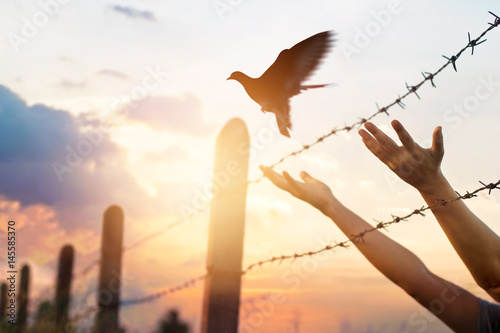 Canvas Print - Woman hands frees the bird above a wire fence barbed