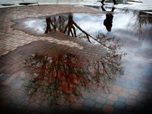 Reflection Of Tree In Puddle Of Water After Sorm