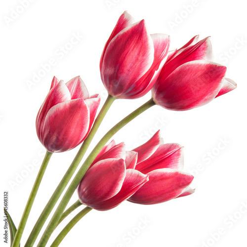 Poster Tulp Bouquet of flowers isolated on a white background