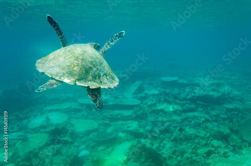 Photo  sea turtle maledives