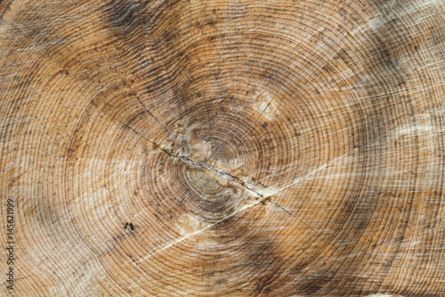 wood texture or background #145621999
