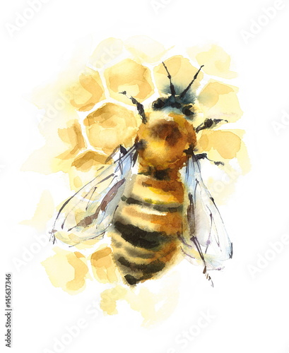 Photo  Watercolor Honey Bee on Honeycomb Hand Painted Illustration isolated on white ba