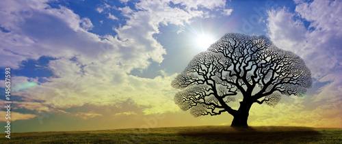Winter Oak Tree Banner - a black silhouette of a large oak tree with no leaves against a gold and blue wide sky with bright sunburst