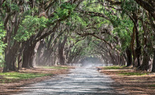 Long Dirt Road Lined With Live Oaks And Spanish Moss In Early Morning