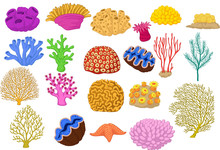 Set Of Colorful Corals, Clamp And Starfish