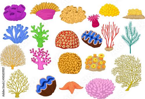 Fototapeta premium Zestaw kolorowych korali, zacisku i rozgwiazdy