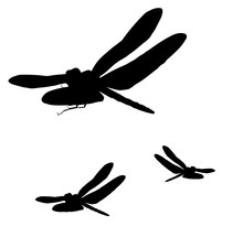 Silhouette Of Dragonfly. Two O...