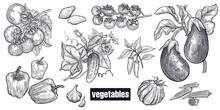 Various Vegetables Set.