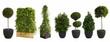 canvas print picture - große Pflanzen für Veranstaltungen auf weiß isoliert im XXL-Set