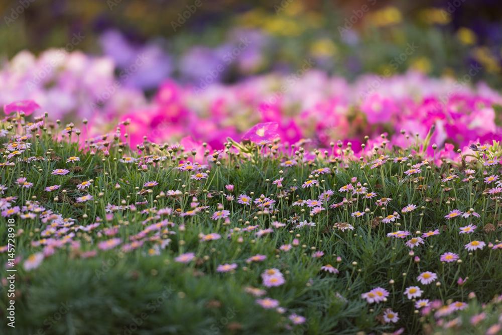 9089794954a Poster, Foto Dubai miracle garden - Koop op EuroPosters.nl
