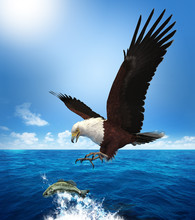 Eagle Attacking A Fish