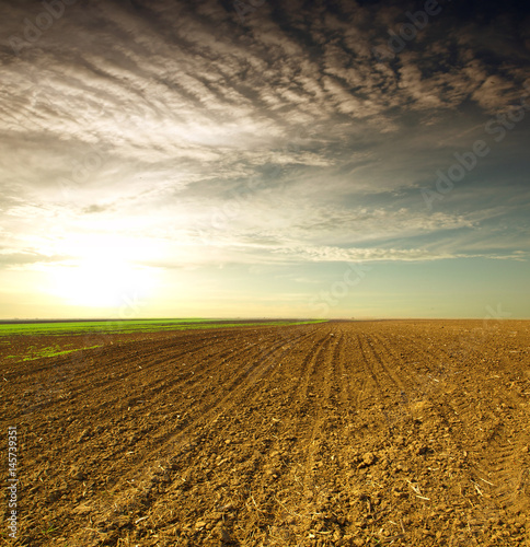 Papiers peints Vignoble Plowed field in spring time with sky
