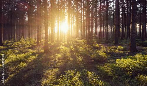 Fotobehang Natuur Idyllic forest with sunlight
