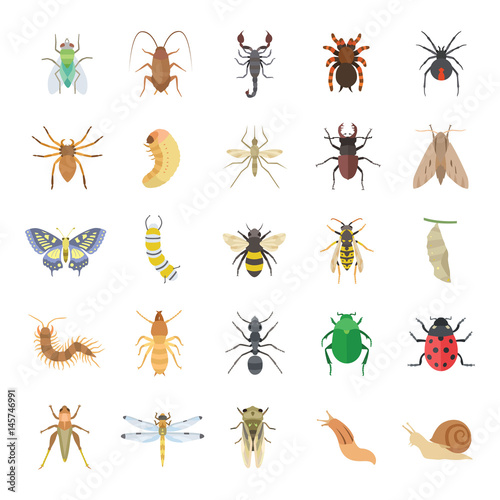Slika na platnu Insects color vector icons