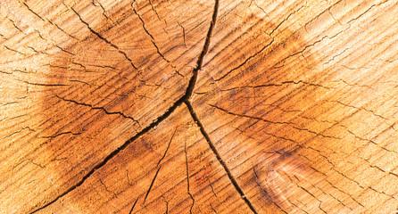 Fototapeta Tronco de árvore.