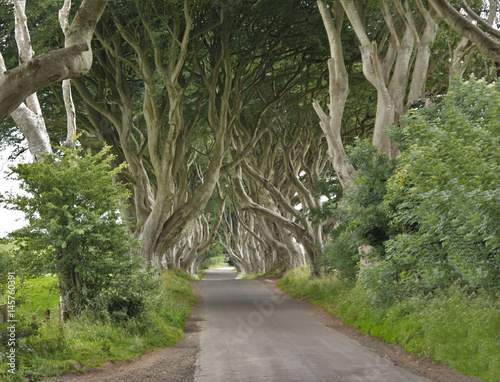 Photo  Irlande du nord, les arbres tortueux de Dark Hedges, de Ballymoney à  Westeros