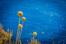 Bloom Near The Sea