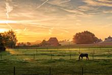 Horse Grazing On Foggy Morning At Sunrise (Kortenaken, Belgium)