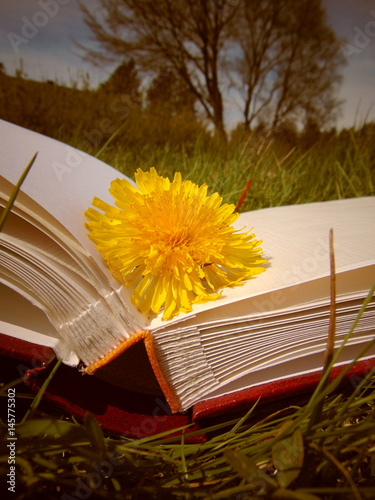 Valokuva  Yellow dandelion laying on hardback book in the garden