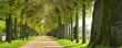 canvas print picture - Park mit Lindenallee im Frühling, erstes frisches grünes Laub