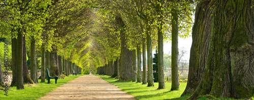 Fotografie, Obraz  Park mit Lindenallee im Frühling, erstes frisches grünes Laub