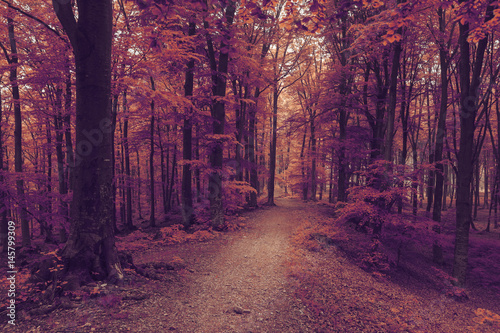 Photo Stands Crimson Fairy tale forest scene