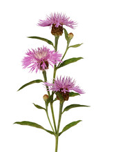 Pink Thistle Flowers Bouquet