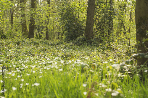 Photo Stands Spring green and wild vegetation in a forest