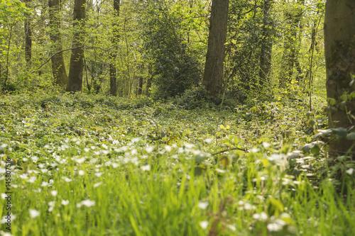 Fototapeta green and wild vegetation in a forest obraz na płótnie