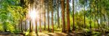 Fototapeta Las - Wald im Frühling, Panorama einer idyllischen Landschaft mit Bäumen und Sonne