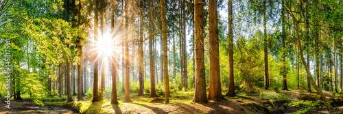 Fotobehang Bossen Wald im Frühling, Panorama einer idyllischen Landschaft mit Bäumen und Sonne