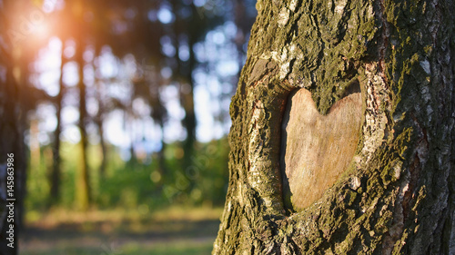 Fotografia  Natural heart formed in the tree trunk in vibrant green forest