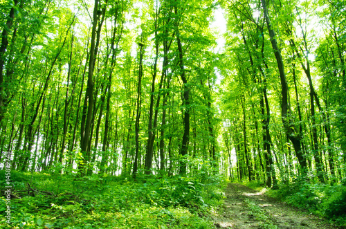 Photo Stands Road in forest Subtropical forest