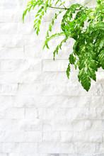 Green Leaf White Wall Background
