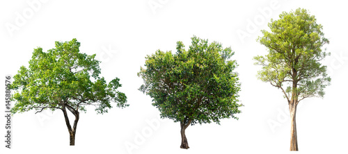 Papiers peints Arbre tree isolated,tree on white background,collections tree isolation.