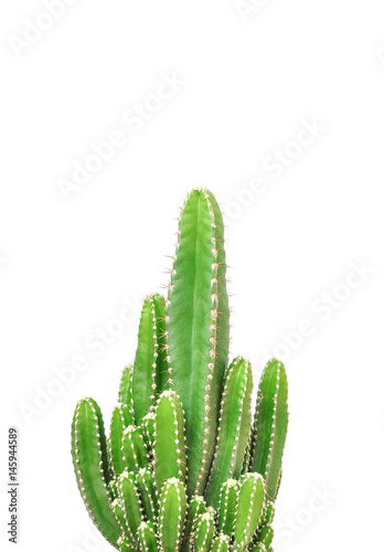 Spoed Foto op Canvas Cactus Cactus isolated on white background