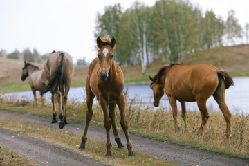 Foal surrounded by mature horses.
