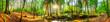 canvas print picture Wald Panorama mit Bach und Sonne