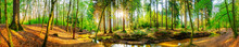 Wald Panorama Mit Bach Und Sonne