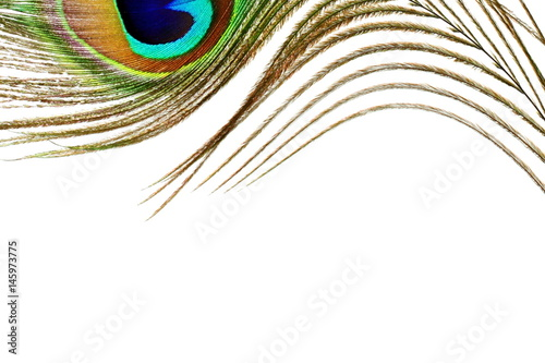 Tuinposter Pauw peacock feathers in white background with text copy space
