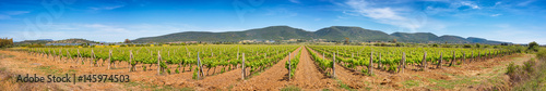Foto op Aluminium Wijngaard Panoramic view of a large Sardinian vineyard in spring