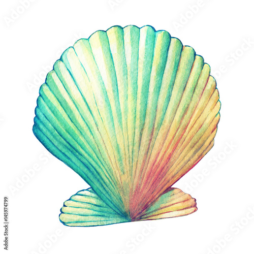 Fotografering  Illustrations of sea shells