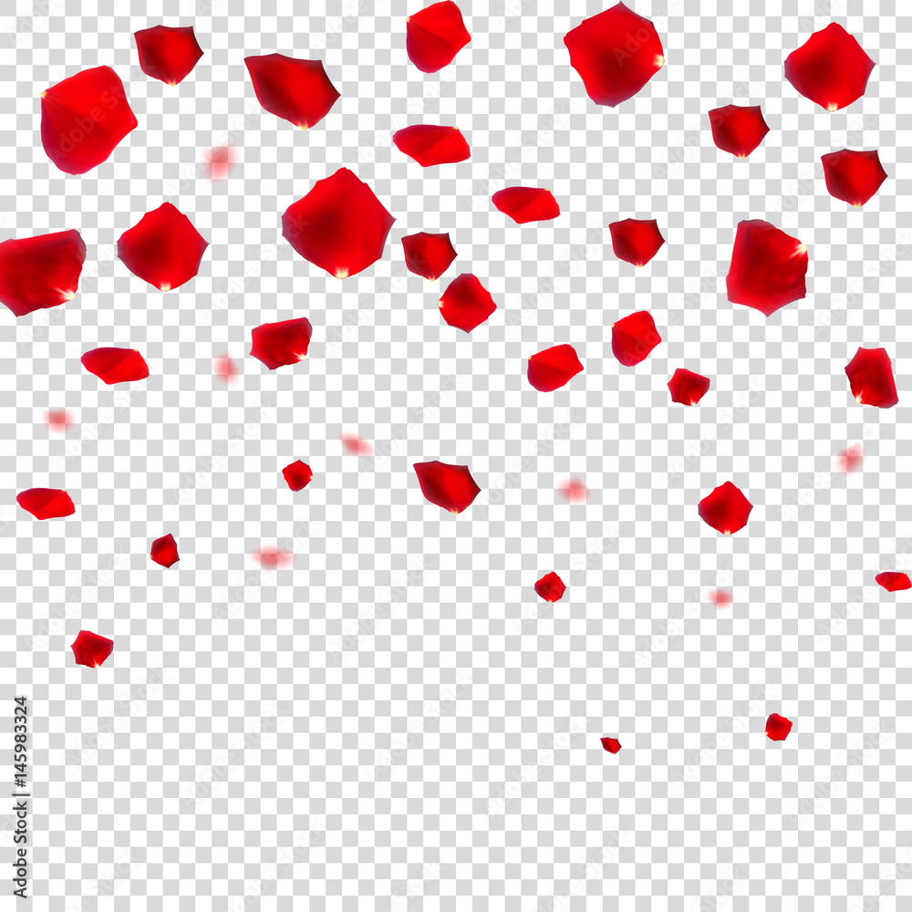 Fototapeta Abstract Natural Rose Petals on Transparent Background Realistic