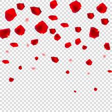 Abstract Natural Rose Petals O...