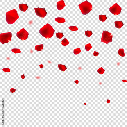 Abstract Natural Rose Petals on Transparent Background Realistic