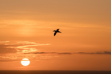 Sunset At The Island Helgoland Germany