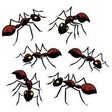 Six Creepy Crawly Ants