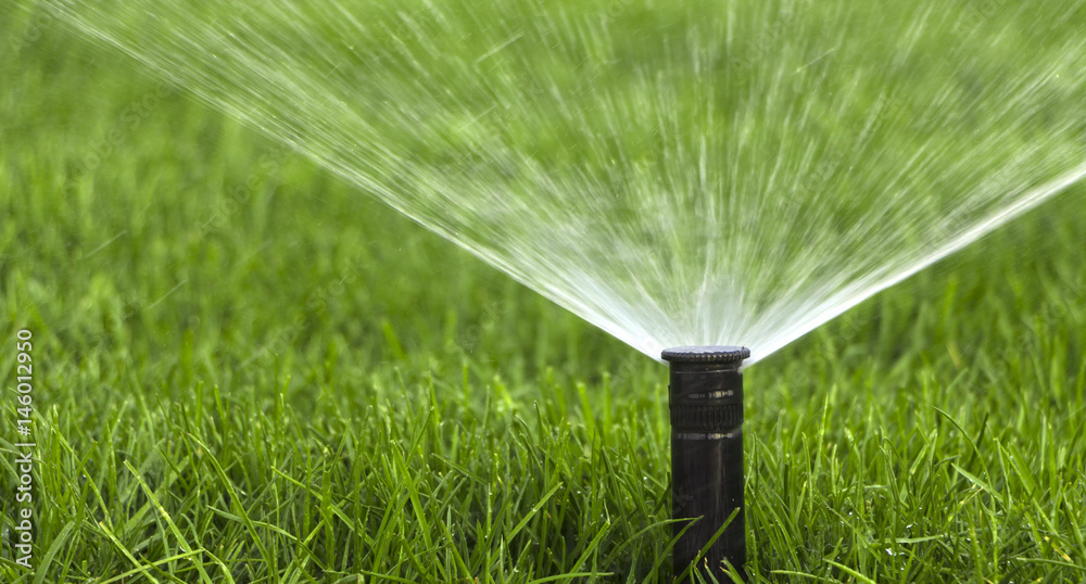 Fototapety, obrazy: automatic sprinkler system watering the lawn on a background of green grass
