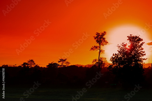 Tuinposter Rood tree and branch silhouette at sunset in sky beautiful landscape